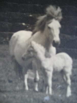 polly with her foal